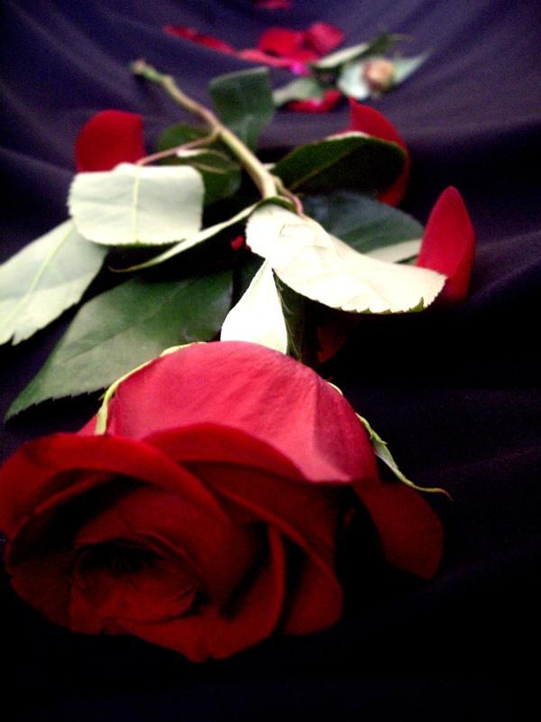 Hasta las rosas más finas...
