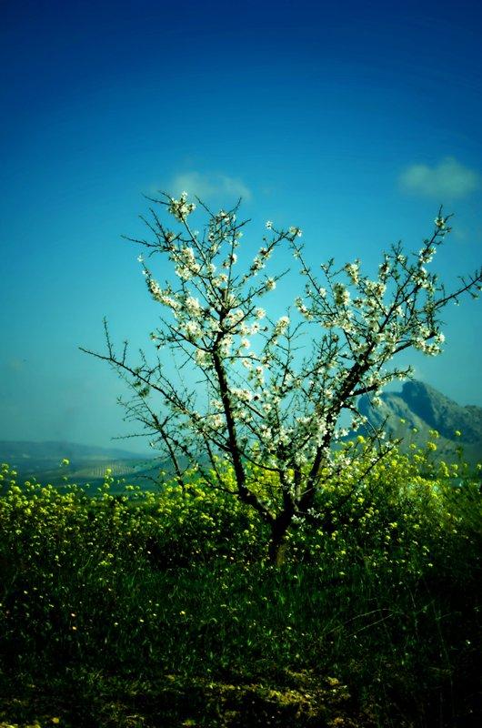 La primavera se va notando