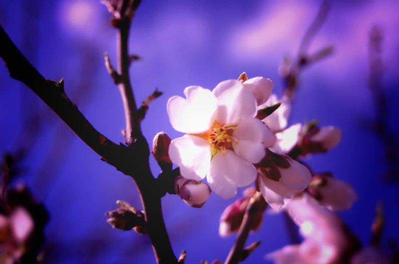 Las flores ya no son tímidas...