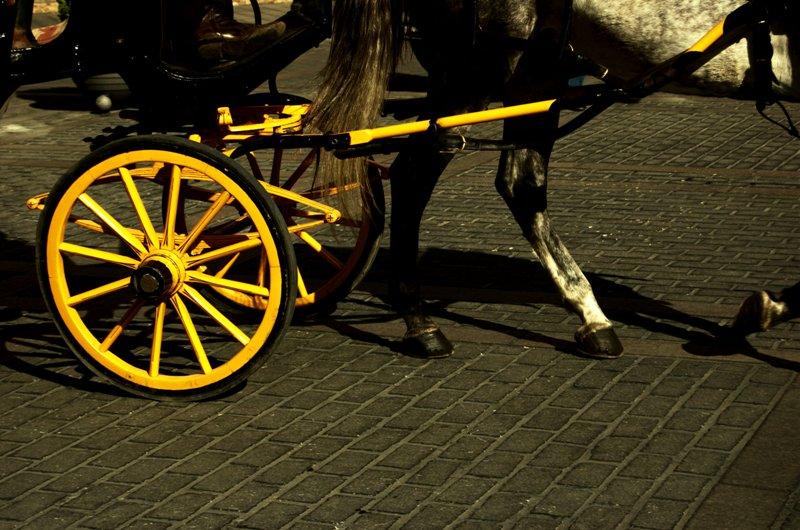 Paseo en caballo