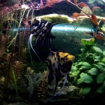 Quisiera ser un pez…