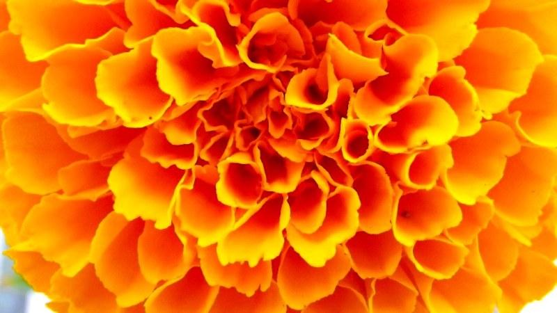 Sol floral