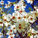 Colores de primavera