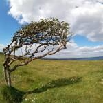 La fuerza del viento