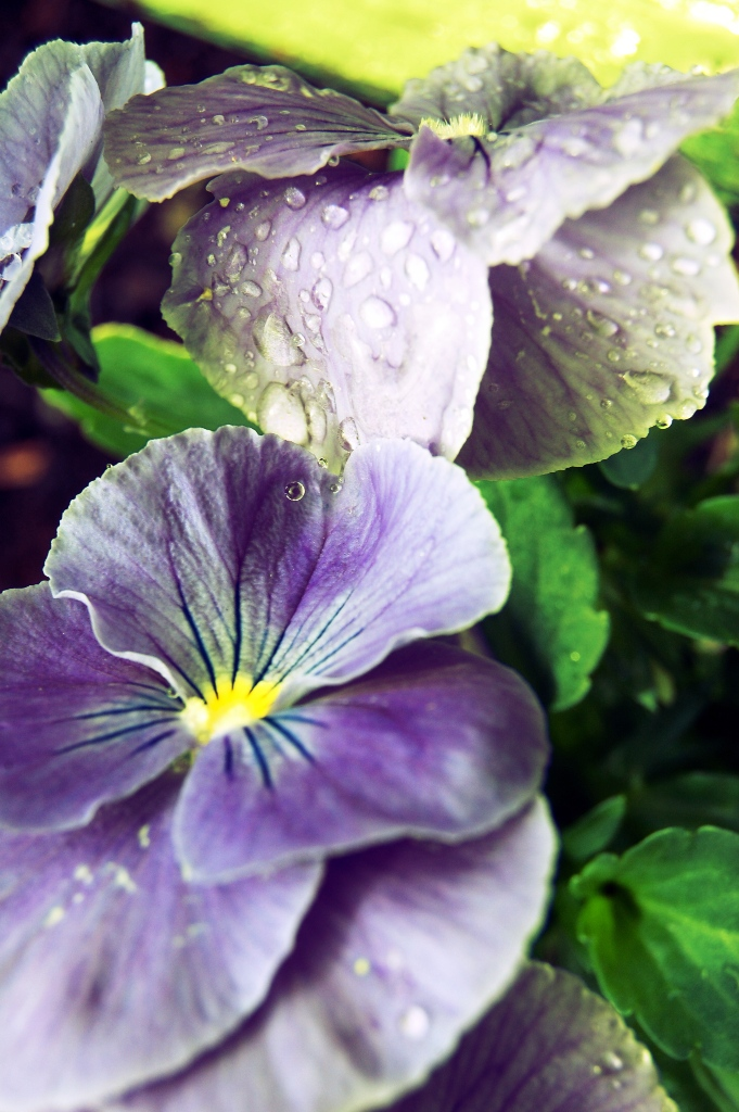 Delicadeza floral