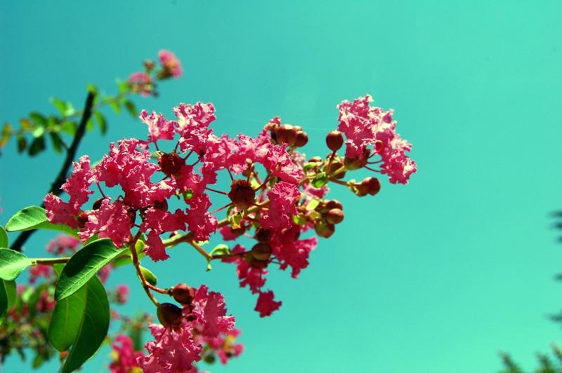 Flores en Guadix