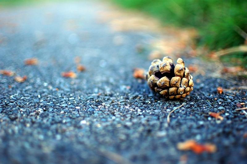 Piña en el camino