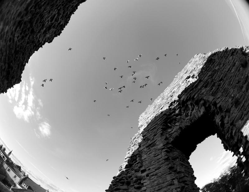 Pájaros sobre ruinas