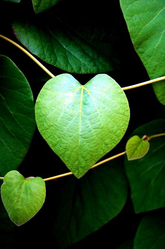 Corazón al natural