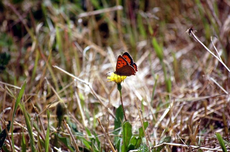Mariposa en florecilla