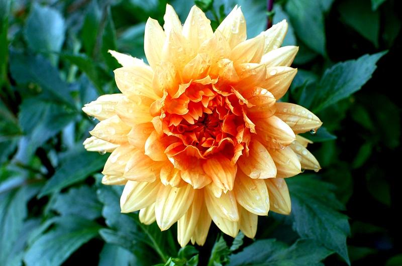 Flor otoñal