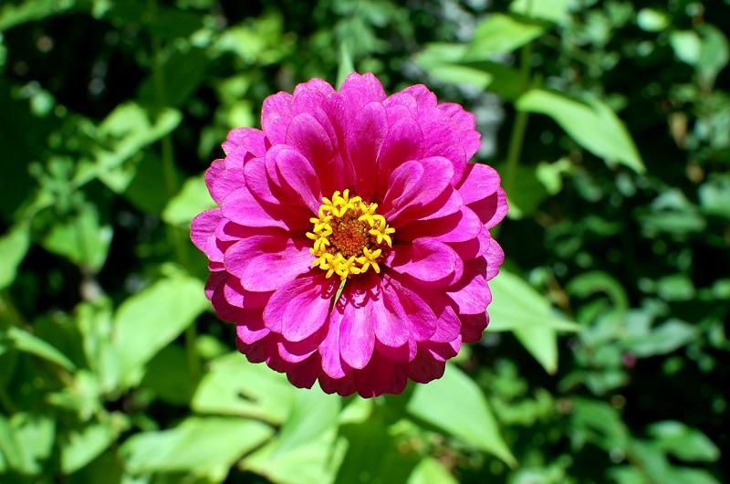 Florecilla en Lanjarón