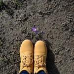 La primavera se va haciendo paso