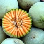Flor de melón