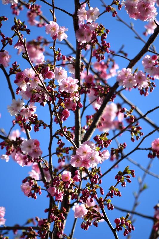Primavera en mi jardín