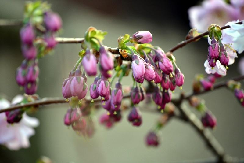Flores por florecer
