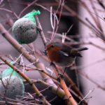 Nuestro pequeño amigo, Robin