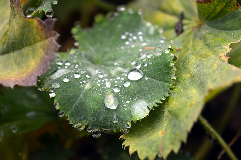 Gotas de otoño